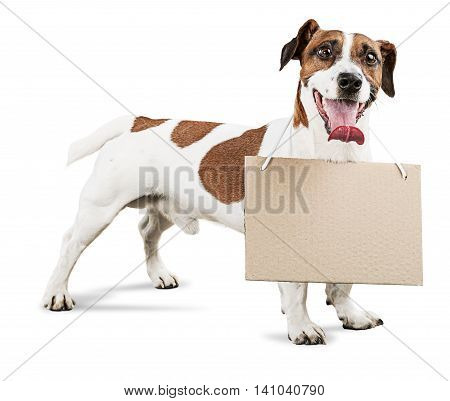 Jack Russell Terrier Working as Sign Holder