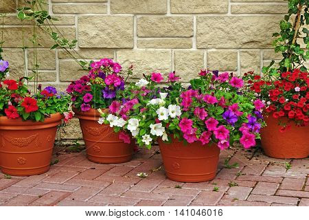 Many Clay Flowerpots With Blooming Plants At  Stone Wall