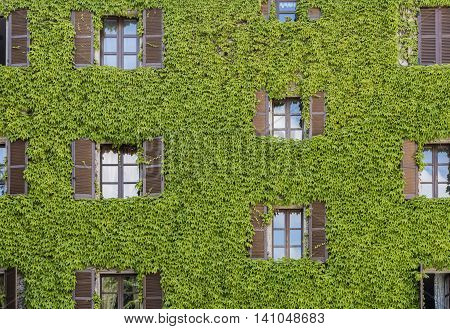 House in Neive covered with Vine and had many windows in Piedmont Italy