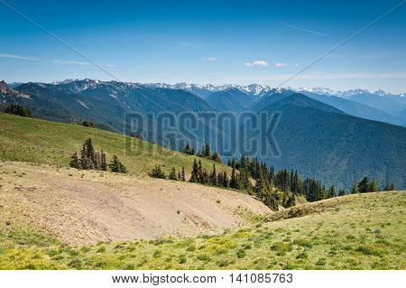 Hurricane Ridge mountains and glaciers in Olympic National Park Washington State uSA