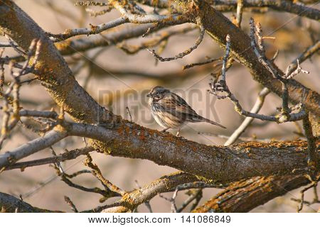 a cute sparrow sitting in a tree with golden light from the sunset in the background