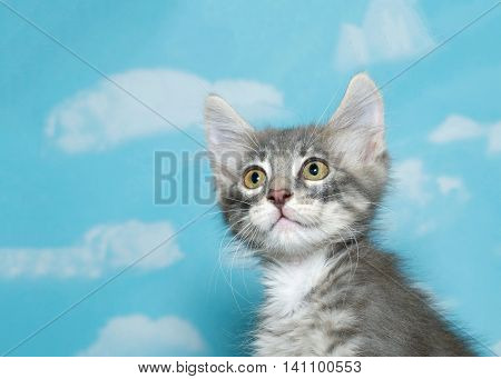 Portrait of a eight week old gray and white fluffy tabby kitten looking to viewers left blue sky background with clouds. Copy space