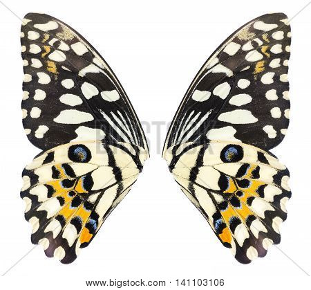 Butterfly wings isolated on white background. File contains a clipping path Lime Butterfly Papilo demoles
