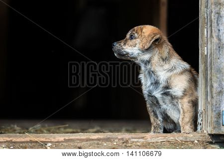 Funny little puppy sitting outdoors at summer day