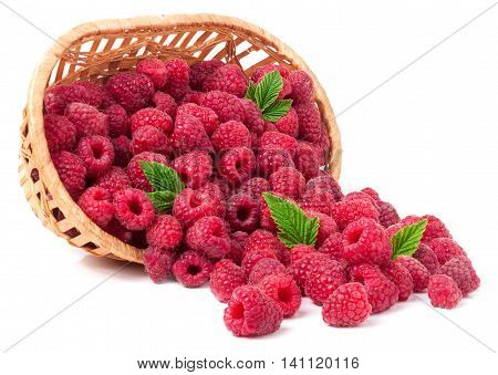 raspberries spilled from a wicker basket isolated.