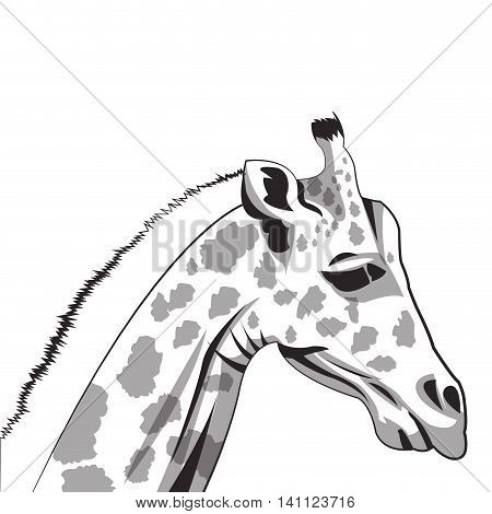 flat design giraffe drawing icon vector illustration