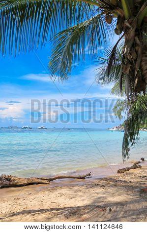 Ideal tropical beach, peaceful sandy shore with clear sea