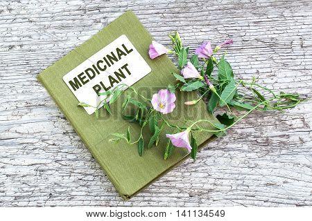 Medicinal plant field bindweed (Convolvulus arvensis) and herbalist handbook on old wooden table. Used in herbal medicine honey plant