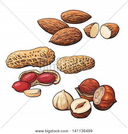 Collection of almond, hazelnut and peanut heaps vector illustration isolated on white background. Set of fresh and ripe nuts in shell and open