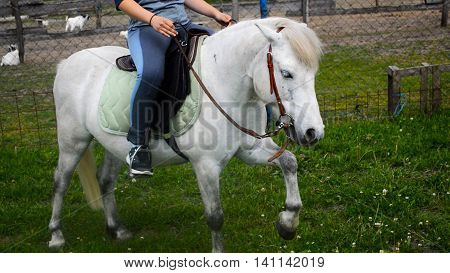 Riding on horse. White horse with rider. The horse performs a lifting legs. It shows the character of the horse.