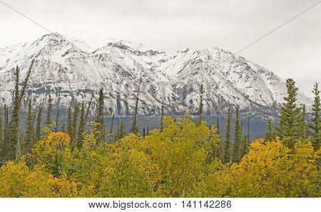 Fall Colors with Snow on the Mountains along the Alaska Highway in the Yukon Territory of Canada
