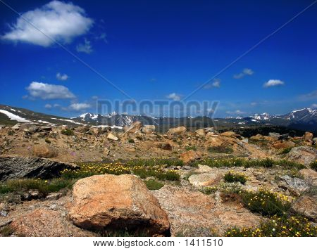 Colorado Mountains With Wildflowers And Blue Sky