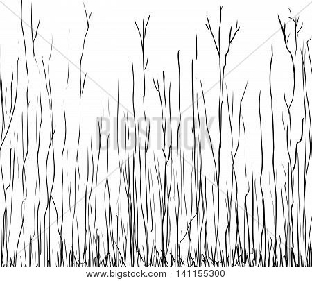 Outline Illustration Of Tall Thin Trees