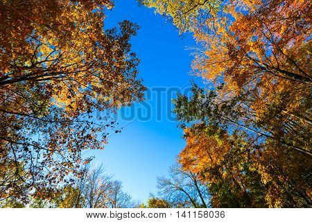 Blue sky completely surrounded by colorful, vivid, autumn trees.