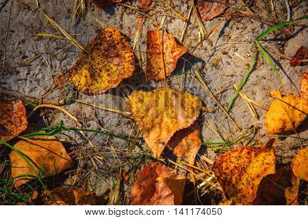 autumn leafage on soil - abstract natural background