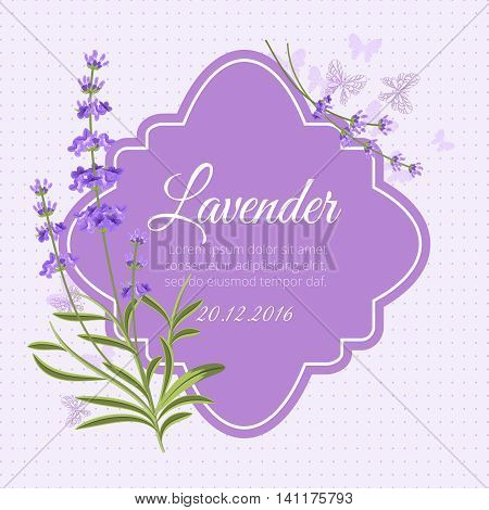 Greeting card, invitation vector template with fragrant lavender. Flower greeting, postcard plant blossom illustration