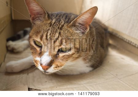 tabby cat sleeping in a paper box