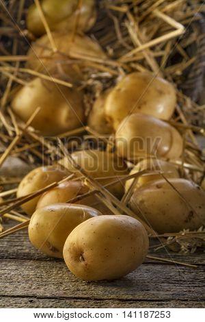 home grown fresh organic potatoes on a rustic background