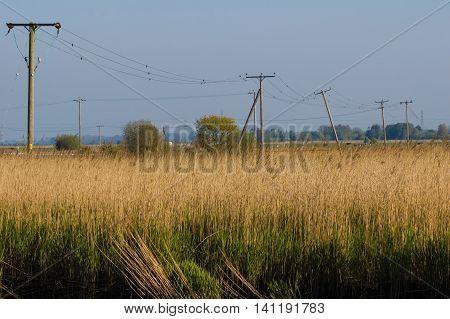Telegraph Poles in barley field at Reedham Norfolk