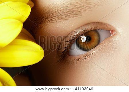 Close-up Macro Of Beautiful Female Eye With Perfect Shape Eyebro