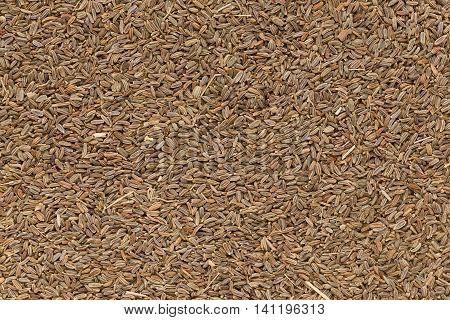 Organic dry Celery or Ajmod (Apium graveolens) seeds. Macro closeup background texture. Top View.