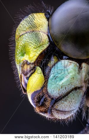 Stacked Macro of the Head of a Hawker Dragonfly against a dark background