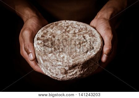 French Tomme Cheese In The Hands Of A Cheesemaker