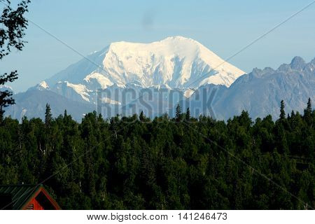 Mt, Denali rises over the trees in the foreground