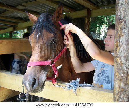 Lazarevskoe, Sochi, Russia - June 28, 2014: The teenager put a bridle on a horse
