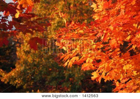 Warm Fall Colors