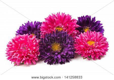 beautiful  flowerhead chrysanthemum isolated on white background