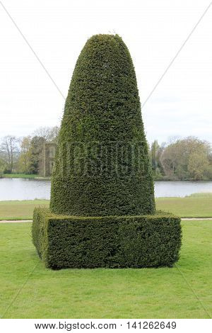 A Tapered Shaped Topiary Formal Garden Hedge.
