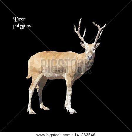 Light deer with horns on black background, vector polygonal. Low poly illustration