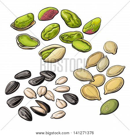 Collection of pistachio, sunflower and pumpkin seeds, vector illustration isolated on white background. Set of fresh and ripe nuts in shell and open