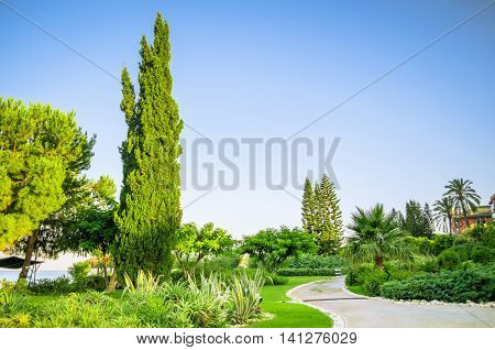 Tropical landscaping with planting and trees conifer lawn foliage shrubs grass and fences. Summer park and gardens of large house or hotel.