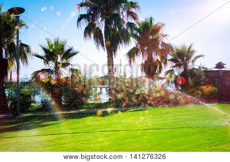 Irrigation park with lawn and palm trees in sunny day with sprinkles and bokeh. Summer park of large house or hotel near the beach. Garden lawn water sprinkler system.
