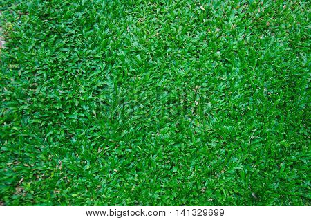 Artificial turf taken from the top, background