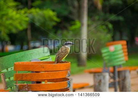 PORTO ALEGRE, BRAZIL - MAY 06, 2016: nice brown bird standing over an orange trash can in the park.