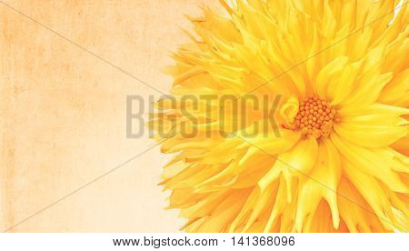 Frilly yellow dahlia with added tint and texture