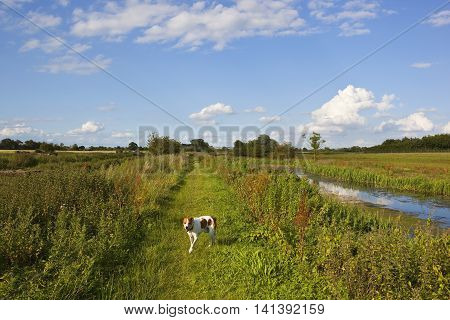 Canal Towpath And Dog