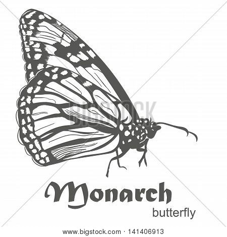 The Monarch butterfly Danaus plexippus vector illustration isolated on white. Hand drawn sketch with text side view