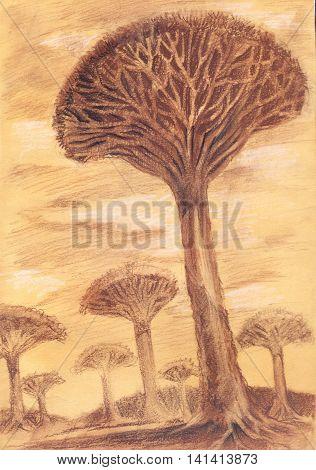 Exotic rare trees. Hand drawn sketch of baobab. postcard illustration