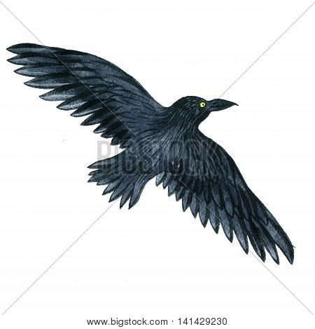 watercolor black flying raven, drawing bird, hand drawn illusration
