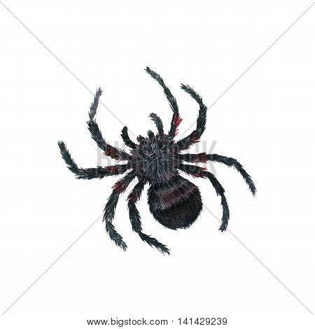 watercolor cartoon spider, halloween symbol, hand drawn illustration
