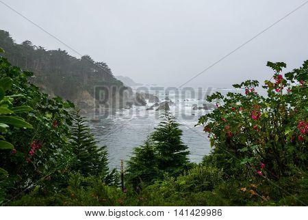 Foggy Day in Big Sur, California