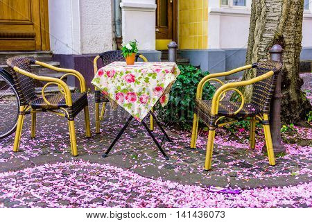 Table with two chairs under pink flowering cherry trees in the old town of Bonn, Germany