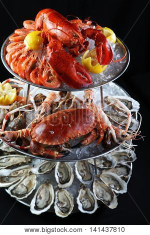 Seafood buffet with lobster oyster crabs and mantis shrimps on ice tray in black background
