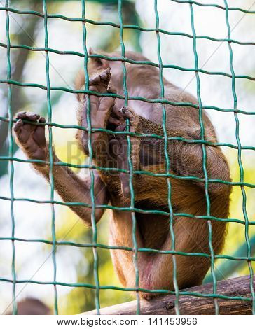 young animal monkey baboon sitting in cage