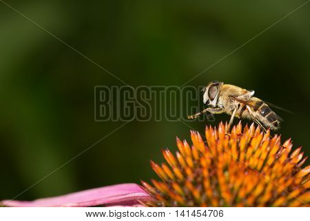 Bee on colorful flower legs up macro view