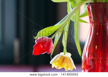 Two tulips wilting in a vase of flowers and lights in the backlight